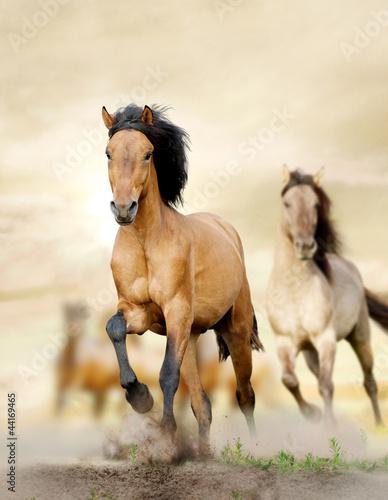 konie w zachodzie słońca