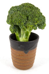 Broccoli in the ceramic cup