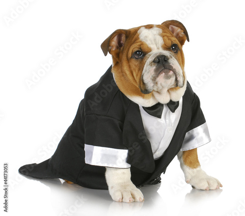 fancy dog