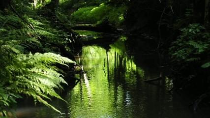 Bach in grünem LIcht