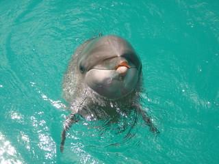 Dolphin, Palau, Rock Islands, Oceania