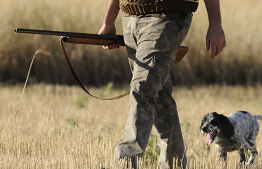 Hunting with english setter
