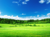 Fototapety field of grass and perfect sky