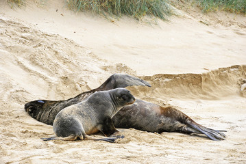Two sea lions resting on the beach