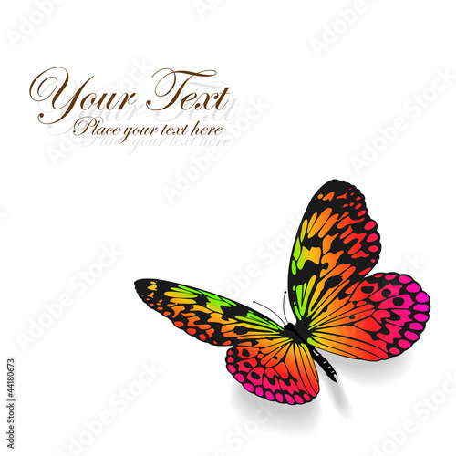 Colorful butterfly on white background.