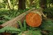 Holzwirtschaft