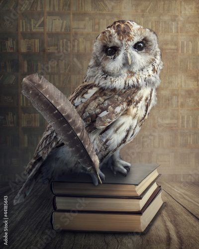 Poster Uil Wise owl