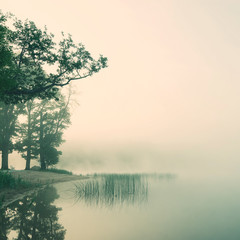 misty morning on a lakeside