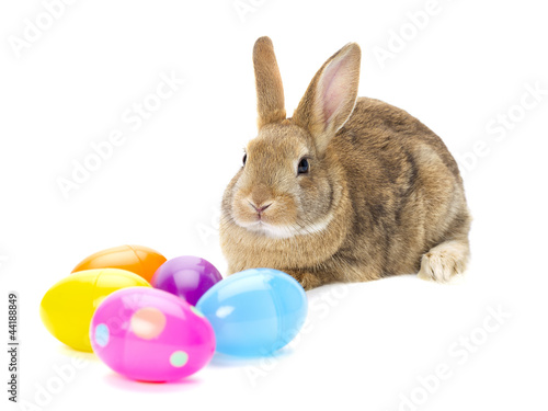 rabbit looking on eggs