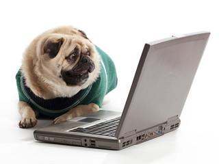 Technology Pug
