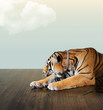 tiger sleep under the sky with cloud on wood floor