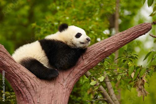 Sleeping Giant dziecko panda