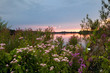 summer flowers by lake at sunset