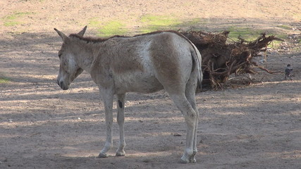 A very cute donkey standing