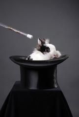 Kaninchen verzaubern