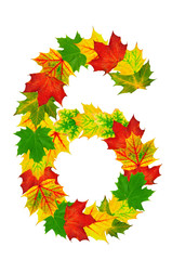 Autumn maple Leaves in the shape of number 6