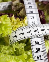 centimètre et salade verte de régime