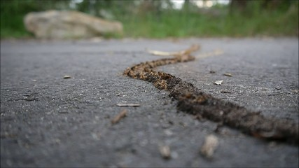 Termitenstraße