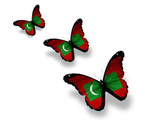 Three Maldivian flag butterflies, isolated on white