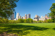 Central park at sunny day