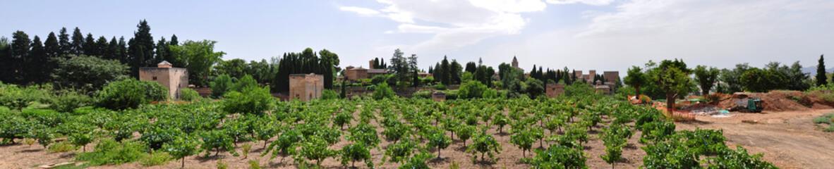 Wineyard in front of Alhambra, Granada, Spain