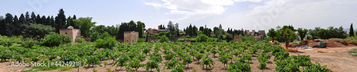 Wineyard in front of Alhambra, Granada, Spain