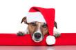 christmas dog santa baby