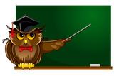 Fototapety Wise owl