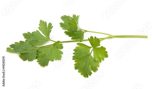fresh herbs parsley