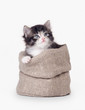 small siberian kitten in sackcloth bag on white background