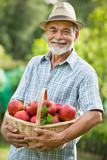 Fototapety Gardener with a basket of ripe apples