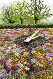 large flower clock in Switzerland