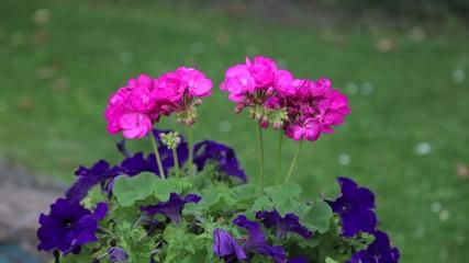 Deutsche Blumen im Garten