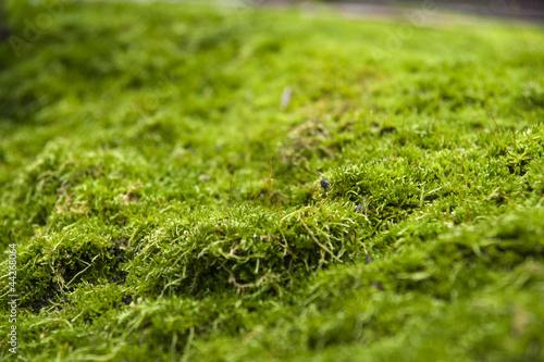 moss on stone - 44268064