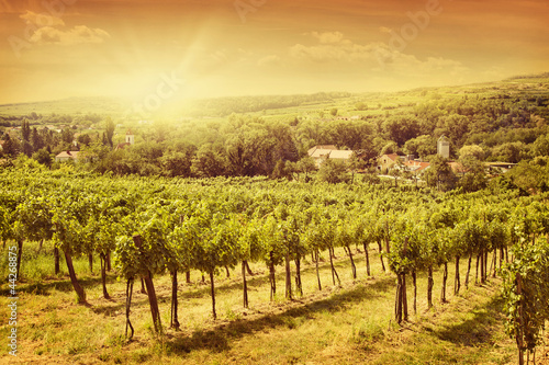 Foto op Plexiglas Wijngaard Vineyards landscape