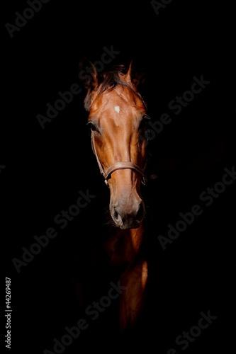pferd - mystisch