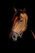pferdeportrait - mystisch