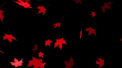 HD Loopable Falling Maple Leaves Animation with Alpha Channel