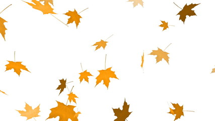 HD Loopable Falling Maple Animation