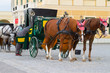 Horses for hire in Vienna