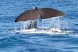 Fototapeten,wakeboarden,schwanz,wildlife,fisch