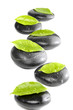 zen basalt with green leaves isolated