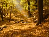 Fototapety sunbeam in forest