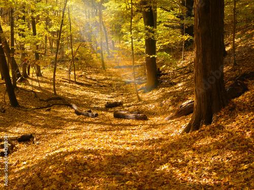 sunbeam-w-lesie