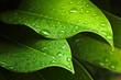 Green leaf - 44282430