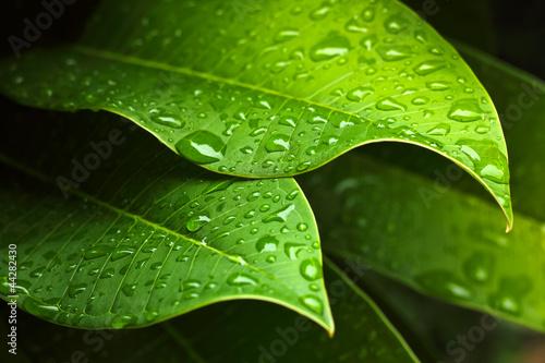 Green leaf © Rawich Liwlucksaneey