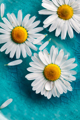 Daisies floating in water © Kati Finell