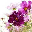 The decorative garden spring flowers