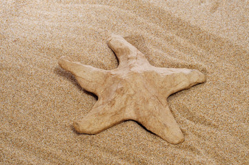 paper-mache seastar on the sand