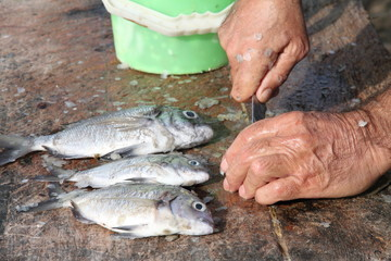 Fisherman gutting fish Lobos Fuerteventura Spain